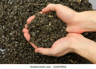 man hands with grain, on sunflower seeds background