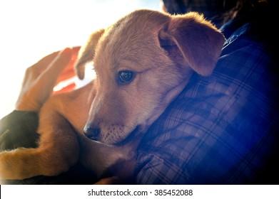 Man hands holding dog