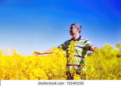 Man with hands wide open on sunny blue sky background.Man stands in golden canola field.Freedom concept.Rear view portrait of man with at standing at the canola fields with his hands wide open towards