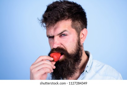 Man handsome strict face sexy hipster with long beard try strawberry. Gastronomic pleasure. Desire concept. Oral pleasure. Hipster enjoy juicy ripe red strawberry. Man eating sweet strawberry.