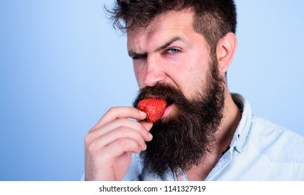 Man handsome strict face sexy hipster with long beard try strawberry. Hipster enjoy juicy ripe red strawberry. Man eating sweet strawberry. Gastronomic pleasure. Desire concept. Oral pleasure.