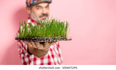 Man with healthy wheatgrass over pink background, focus on grass. Spring healthy lifestyle concept