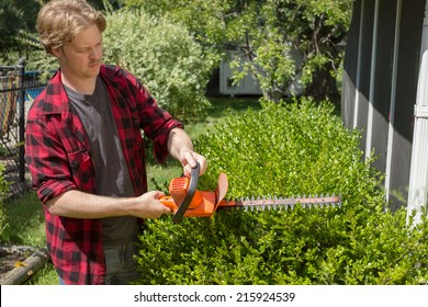 A man hedges bushes around his house