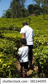 A man helps a kid hike along the tea fields. Grandfather helping grandson on a hike.