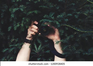 Man hidden in dark of conifer tree, holding camera in his hands and taking pictures