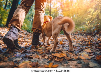 Man hiking in autumn colorful forest with dog