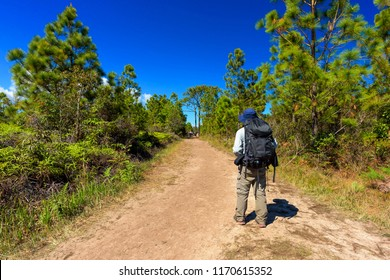Man with hiking equipment walking in mountain forest, Thailand.