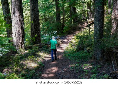 A man hiking on the McKenzie river trail in a pine tree forest near McKenzie River, Oregon
