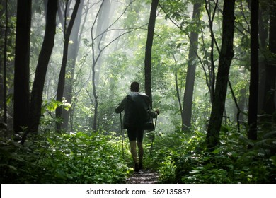 Man hiking in the woods after the rain stopped and the sun now shines through the forest.