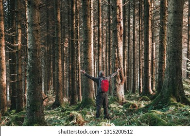 A man with his arms out stretched in a beautiful pine forest on a sunny winters day, Elan Valley, Wales, UK.