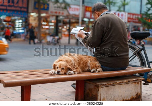 Man with his best friend is sitting on a bench and reading a newspaper in the city. Concept