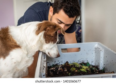 A man and his dog look into their worm farm composting bin