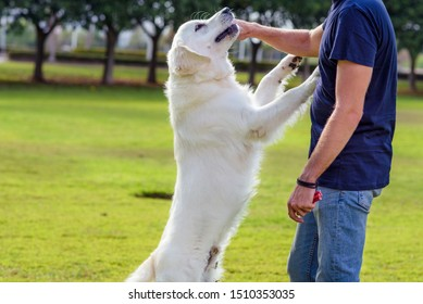 Man with his dog playing outdoor in the park. Young owner hugs his pet.