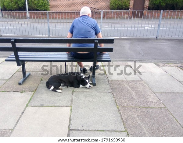 Man and his dog sat on a bench with copy space