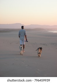 Man and his dogs walking on beach