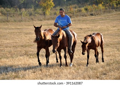 Man with his horse(s) at the field at October 08, 2009 in Pilis, Hungary.