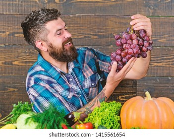 Man hold grapes wooden background. Vegetables organic harvest. Farming concept. Grapes from own garden. Farmer bearded guy with homegrown harvest on table hold grapes. Farmer proud of grapes harvest.