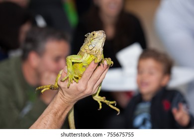 Man holding bearded lizard on his hand with audience watching behind