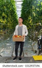 man holding clipboard and examining harvest of tomatoes in greenhouse.