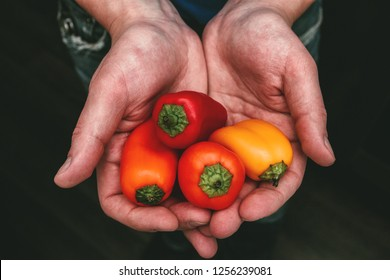 Man holding colorful little peppers in his hands