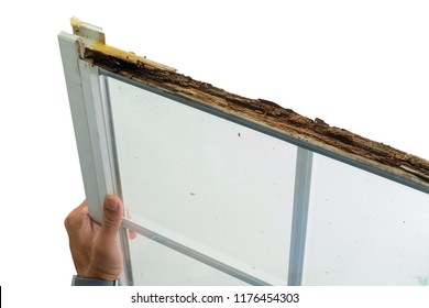 Man holding a damaged window with wet rot in the top of the wooden frame during replacement in preparation for winter over white