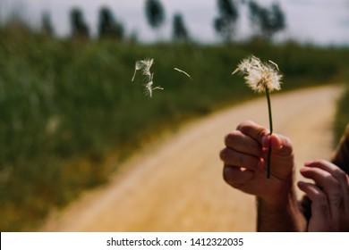 Man Holding a Dandellion in the Wind