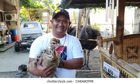 A man is holding an  in a farm in Kalibo, Aklan in Central Philippines March 15, 2019