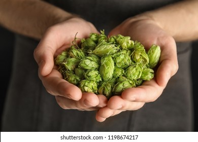 Man holding fresh green hops, closeup. Beer production