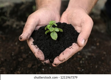 Man holding green seedling with soil outdoors