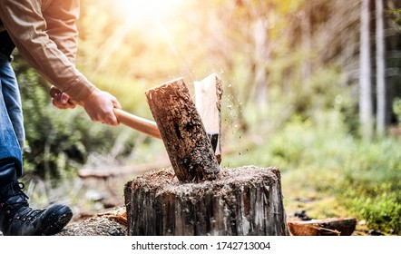Man holding heavy ax. Axe in strong lumberjack hands chopping or cutting wood trunks .