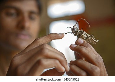 Man holding an insect