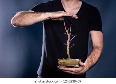 Man holding japanese bonsai tree. Environment conservation concept