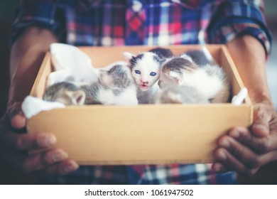 man holding kitten in wooden box