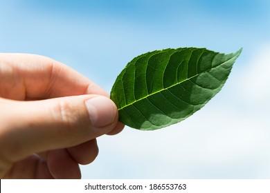 A man holding a leaf against a blue sky