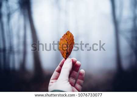 Man holding leaf in Hand, in the Background of a mystical forest