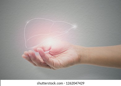 Man holding liver illustration against gray wall background. Concept with mental health protection and care.