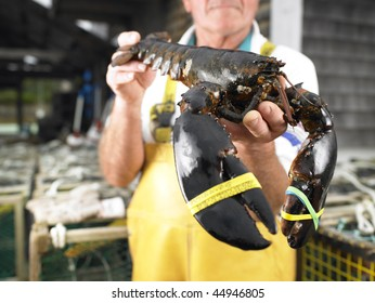 Man holding lobster with bound claws. Horizontal shot.