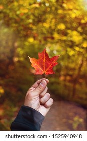 Man holding orange maple leaf in the beginning of autumn in canada., very blurred background, small depth of field