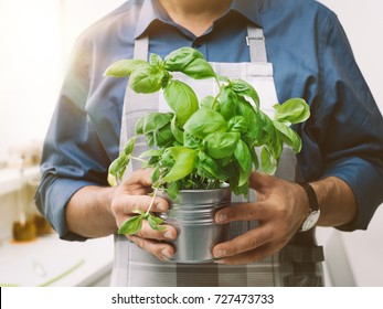 Man holding a pot with fresh basil, he is wearing an apron and cooking