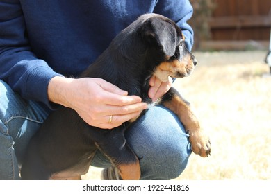 A man holding a puppy Rottweiler in the backyard--human and animal friendship, man's best friend
