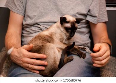 Man holding Siamese oriental cat