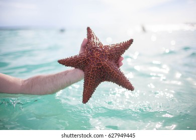 man holding a starfish on a background of blue sea