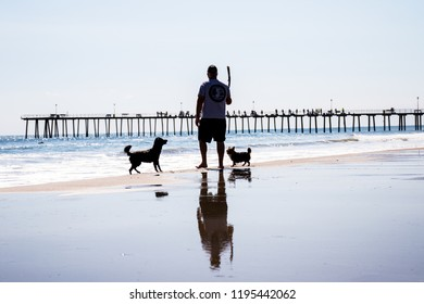 Man holding stick out for his two pet dogs on the beach in Ventnor City, New Jersey