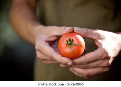 A man holding a tomato, close-up