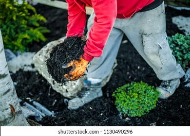 Man holding wood chips in his hands to disperse them in a flowerbed as part of a landscaping project
