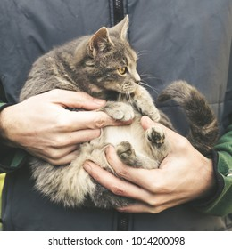 Man holding young domestic cat