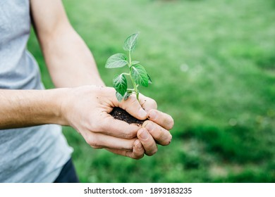 Man holding young plant in hands against spring green background. Fresh spring garden concept. Selective focus