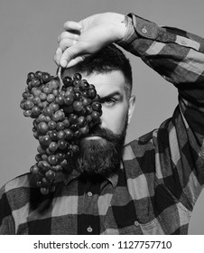 Man holds bunch of purple grapes isolated on green background. Winegrower with strict face hides behind cluster of grapes. Winemaking and autumn crops concept. Farmer shows his harvest.