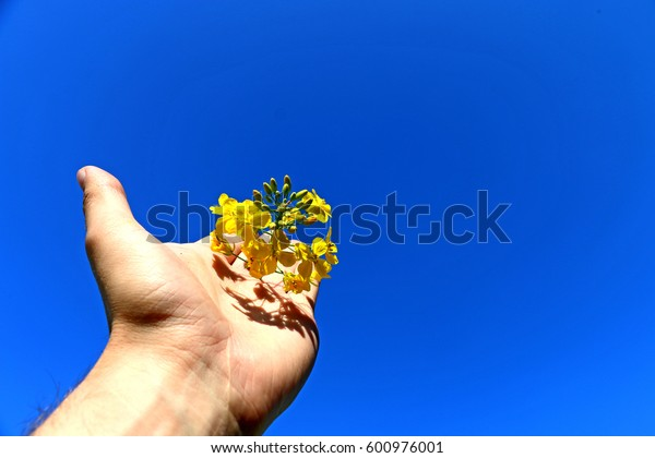 man holds in his hand the fruits of rape,