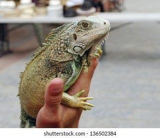 A man holds an iguana at a town square in Casco Viejo, Panama City, Rep. of Panama. Photo taken on April 2013.